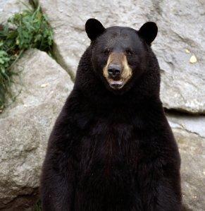 a bear...